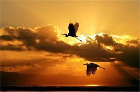 http://www.plataformaafectadosela.org/wp-content/uploads/2011/12/alas-para-volar2.jpg